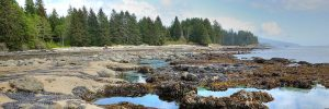 photo of west coast shore line