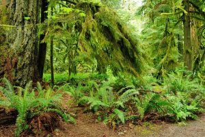 image of west coast forest